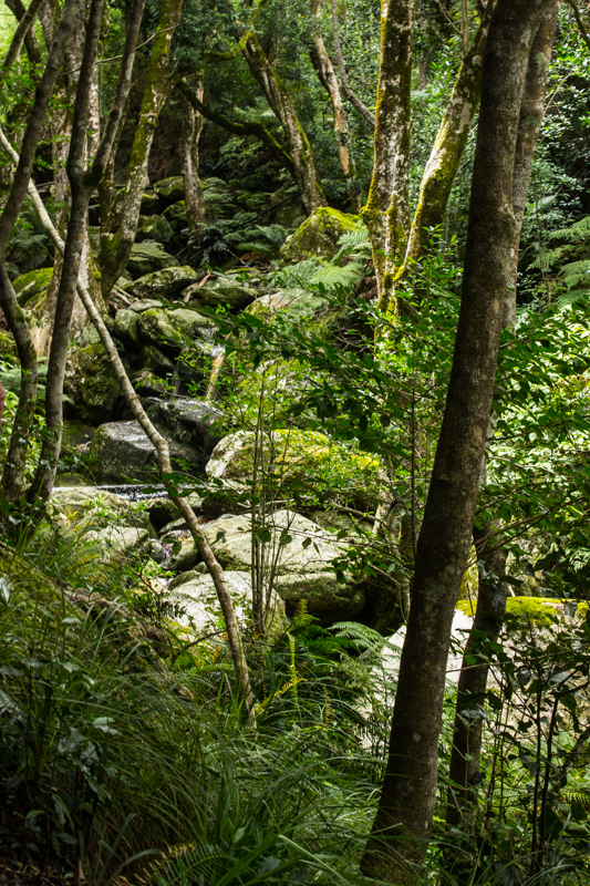 The indigenous forest of the Duiwelskloof Waterfall