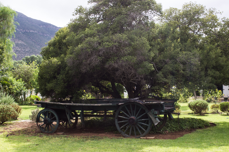 Wagon in the garden of Reinet House