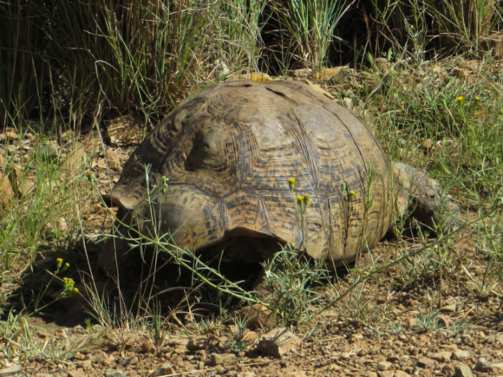 Tortoise on the edge of the road