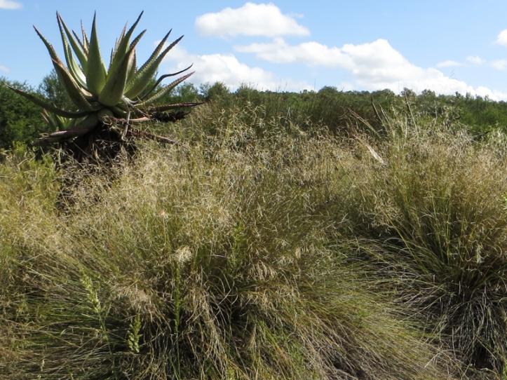 Aloe Trail, Bontebok National Park
