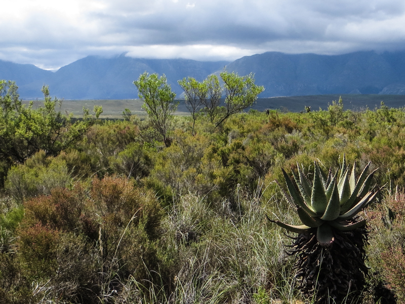 The Bontebok National Park
