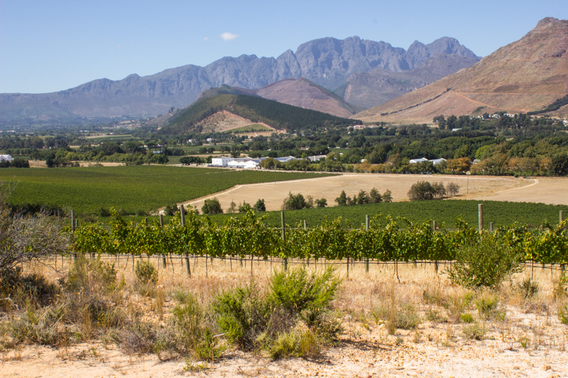 Groot Drakenstein mountains on the horizon & La Motte vineyards