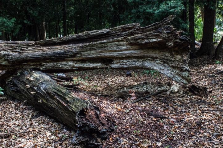 IN the woods at Vergelegen