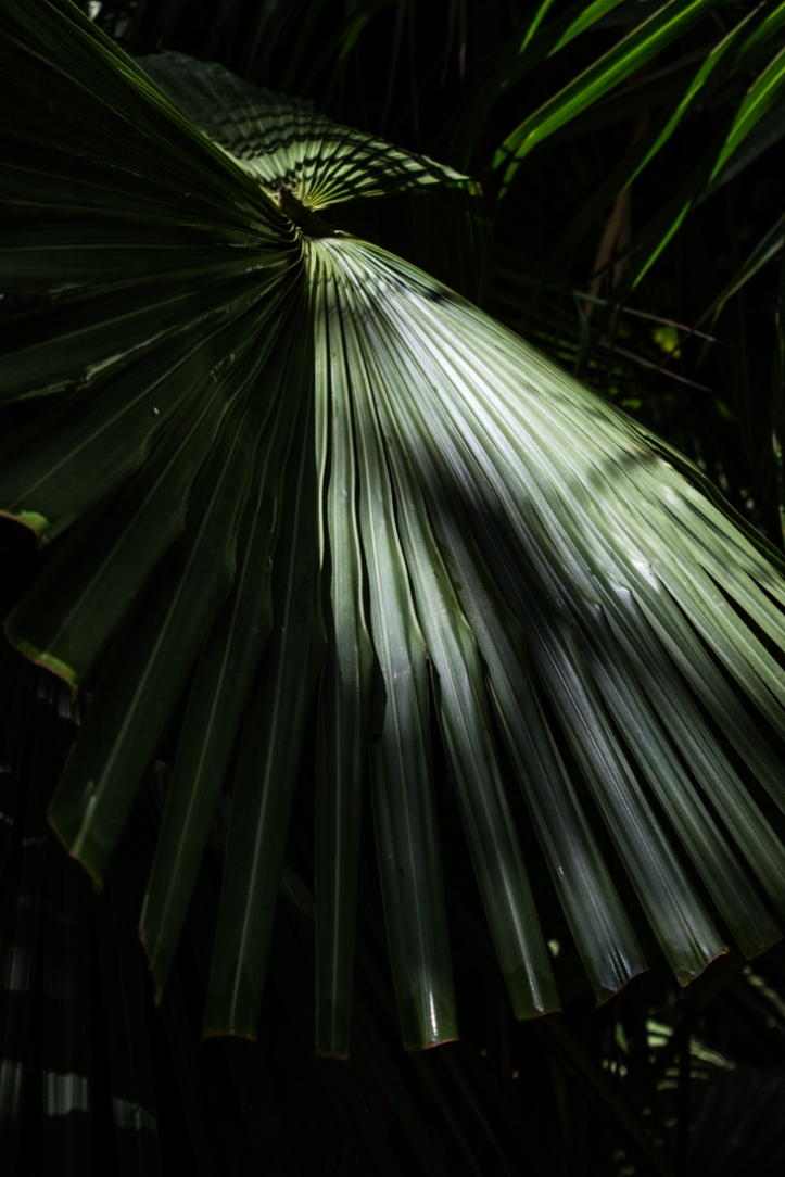 Palms at Vergelegen