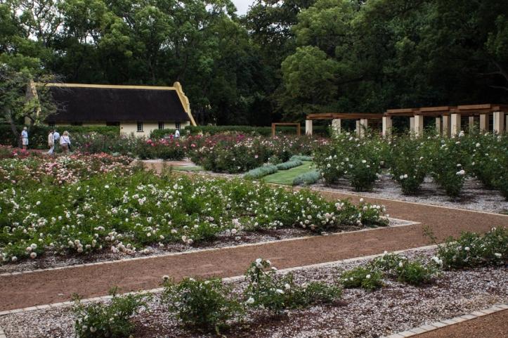 The rose garden at Vergelegen