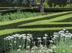 The Herb & Vegetable Garden at Vergelegen