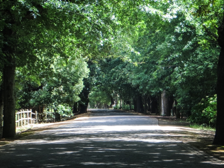 The Avenue at Vergelegen