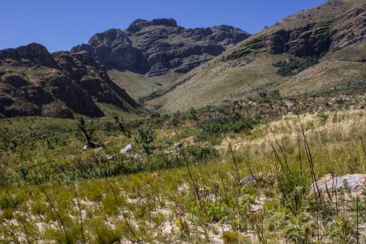 Looking into Swartboskloof in the Jonkershoek Nature Reserve