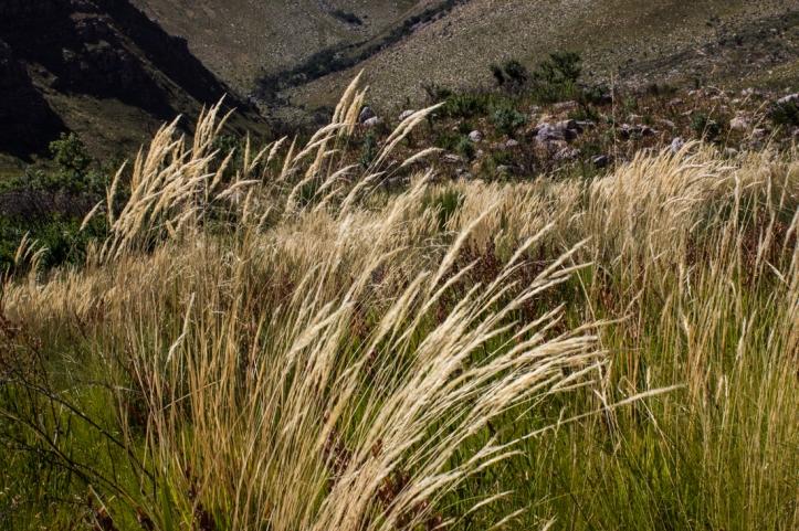 In the Jonkershoek Nature Reserve