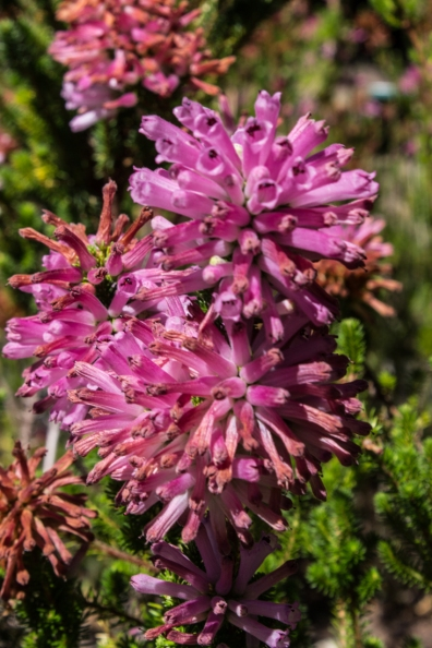 16-2-29 Kirstenbosch LR-2077