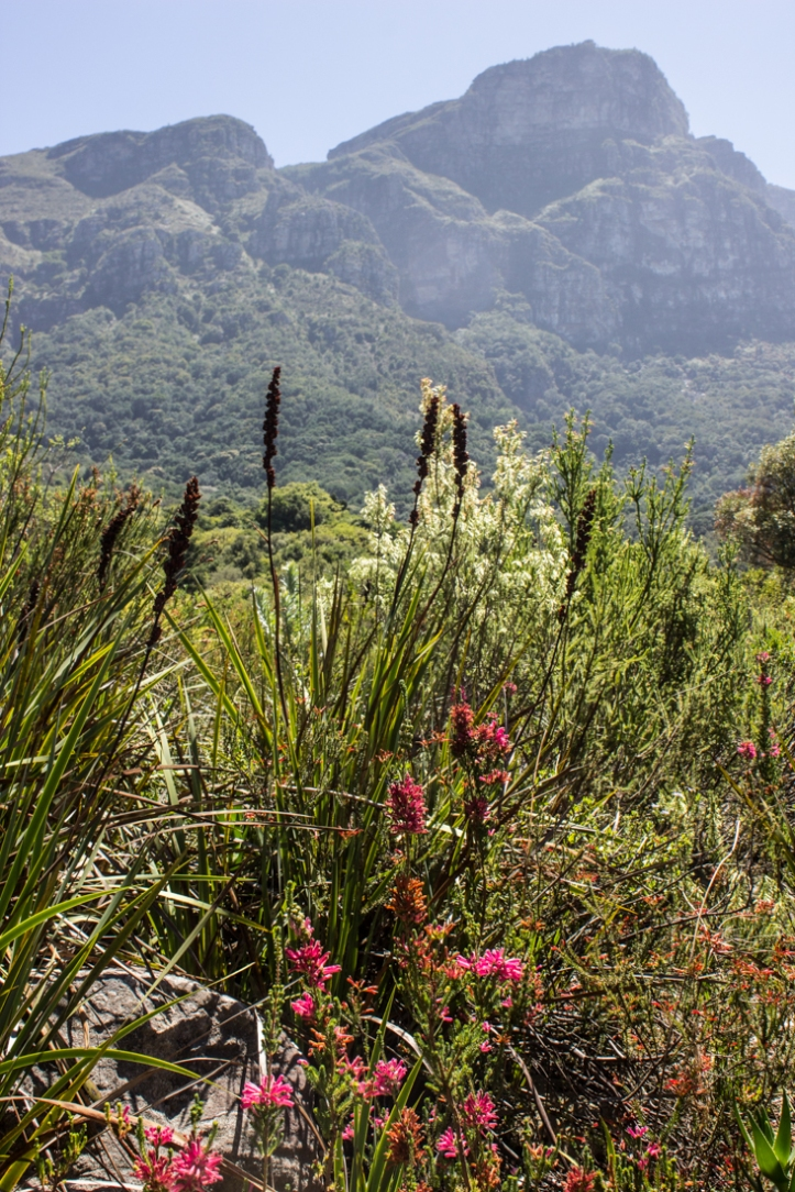 The Koppie, Kirstenbosch