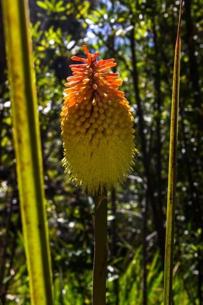 16-2-29 Kirstenbosch LR-2211