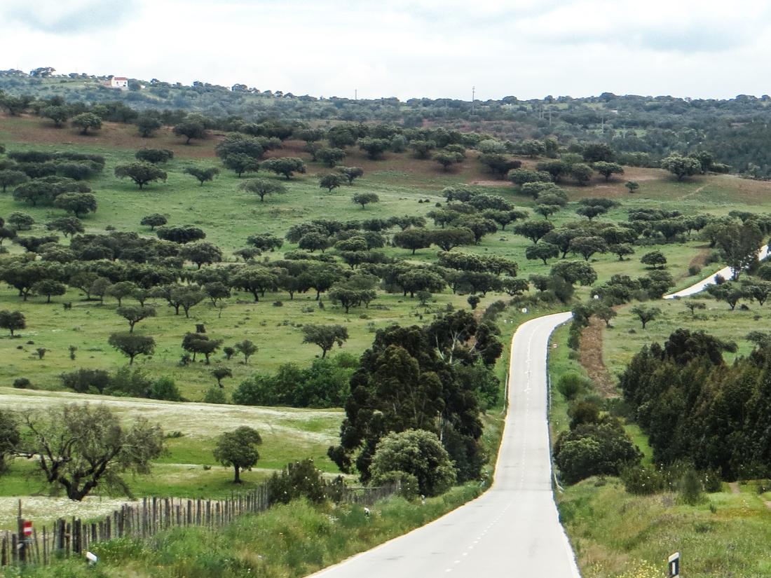 The road from Evora to Vila Vicosa