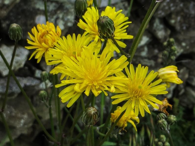 Flowers around Chao da Velha