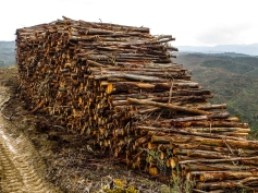Logging around Chao da Velha