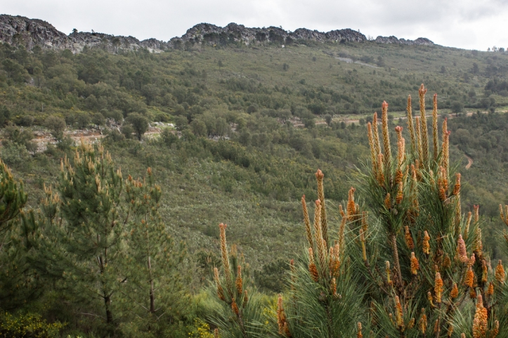 The PR7 route at Carreiras