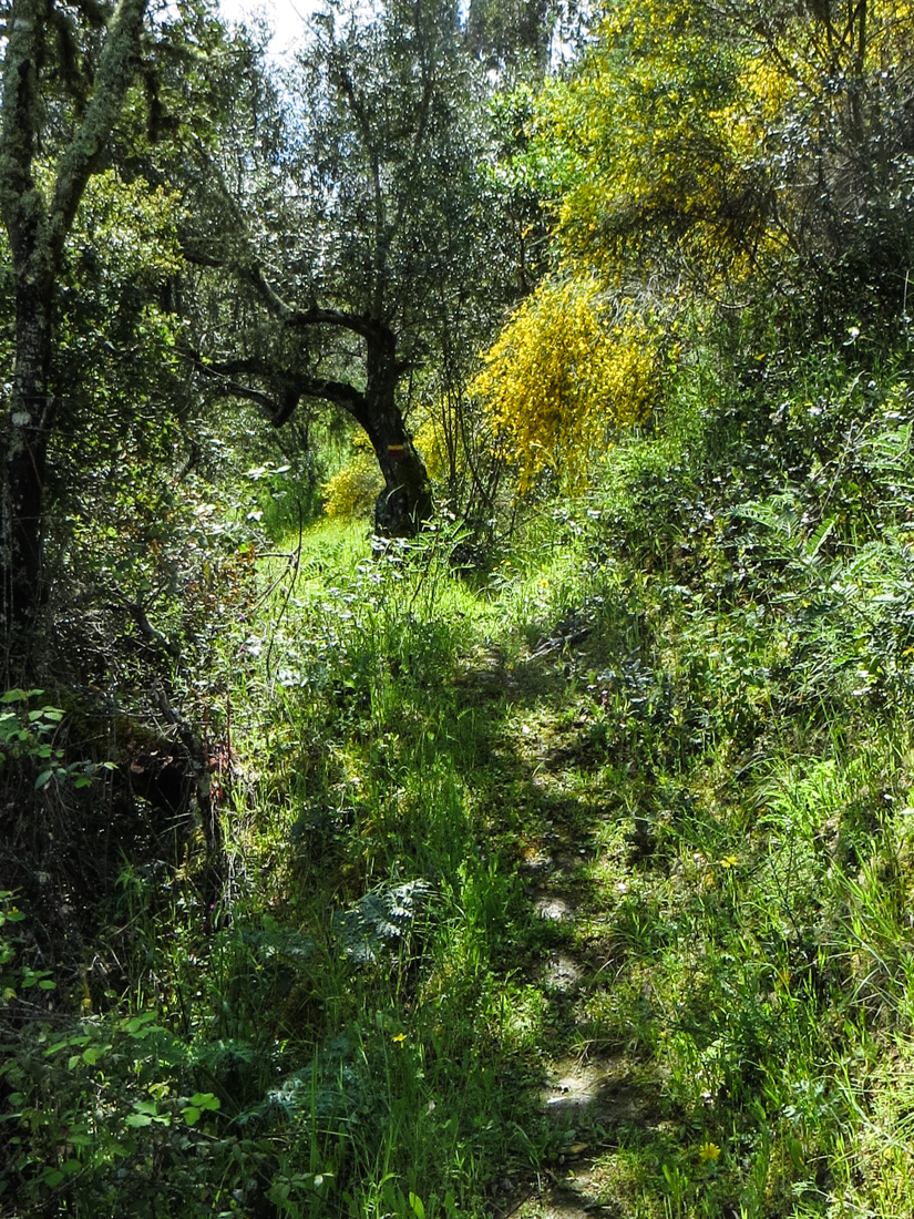 The path along the Sever River, PR7-NIS