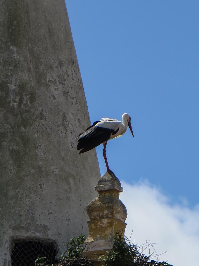 Stork in Montalvao