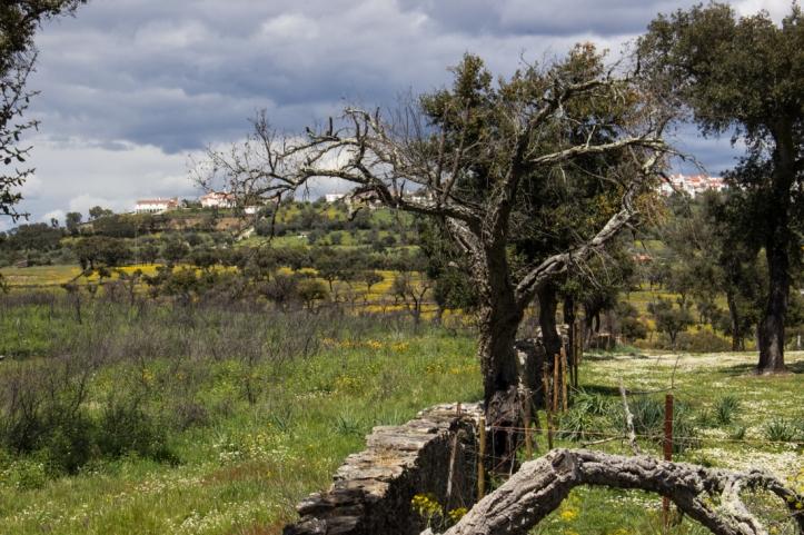 The countryside near Montalvao