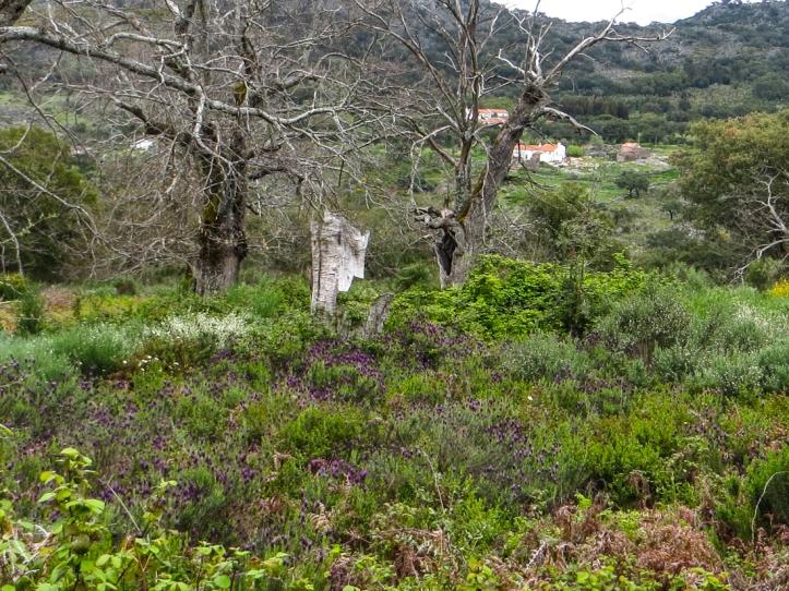 Monte Baixos near Galegos