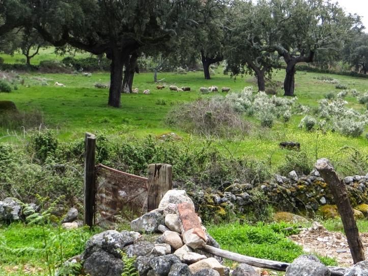 16-4-23 Walk at Galegos LR-0857