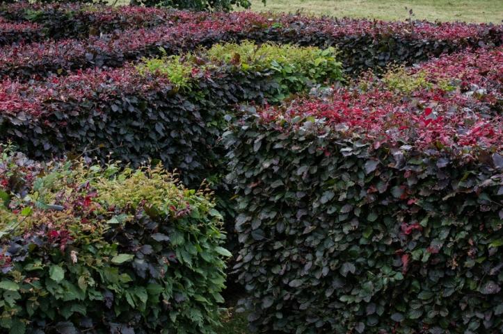 The Maze at Wyken Hall