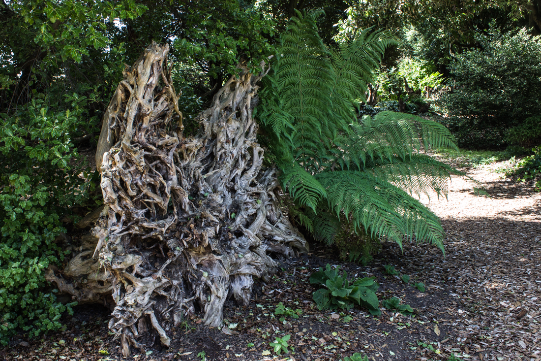 The Stumpery, Ickworth House