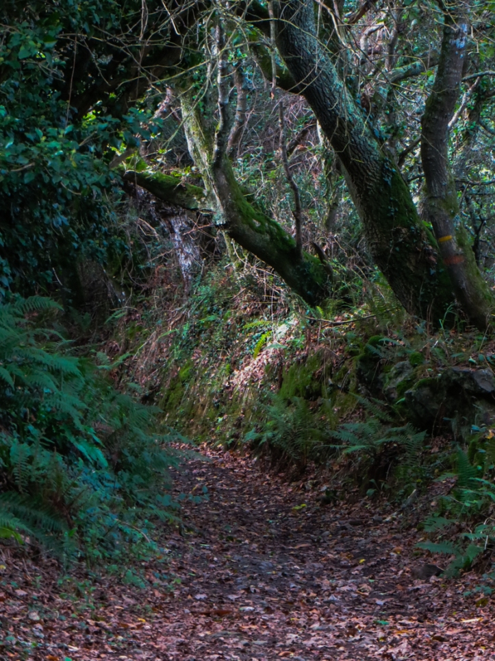 Hidden paths on Walk no.20, Walks in Finistere