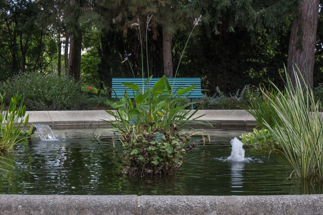 The pond in the Botanical Gardens, Thabor Gardens