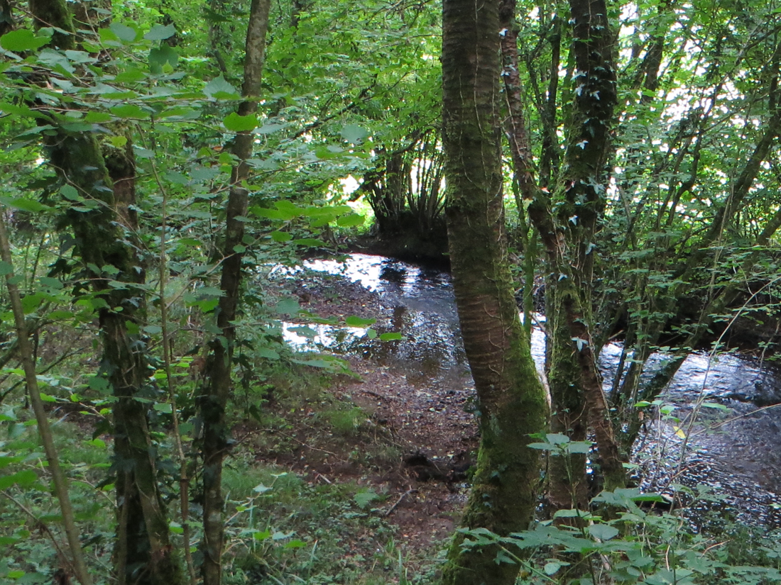 Forest walk at Beurc'hoat