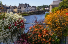 Flowers along the Blavet River, Pontivy