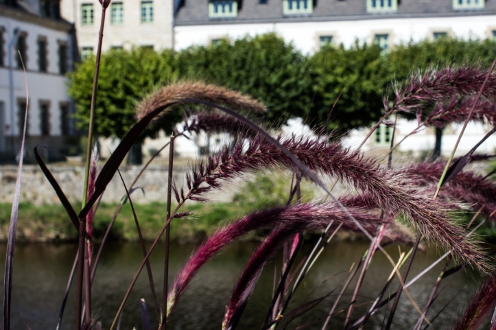 Flowering grasses in pots along the Blavet River