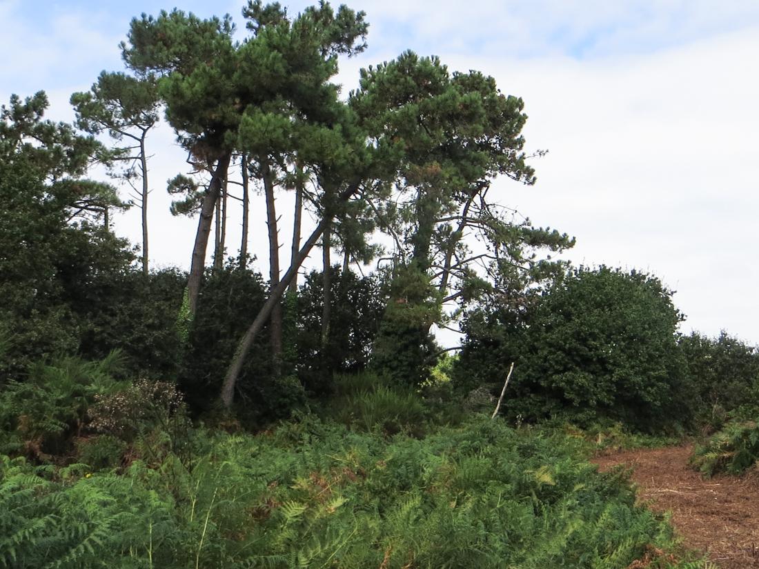 Countryside at Plobannalec