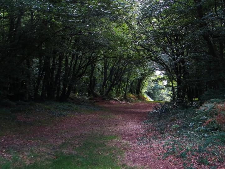 The woods of Nevet