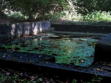 Fountain in the Bois de Roscoure