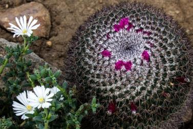 16-9-17-roscoff-exotic-garden-lr-0542