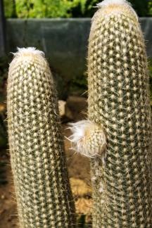 16-9-17-roscoff-exotic-garden-lr-0555