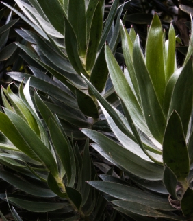 16-9-17-roscoff-exotic-garden-lr-0589-2