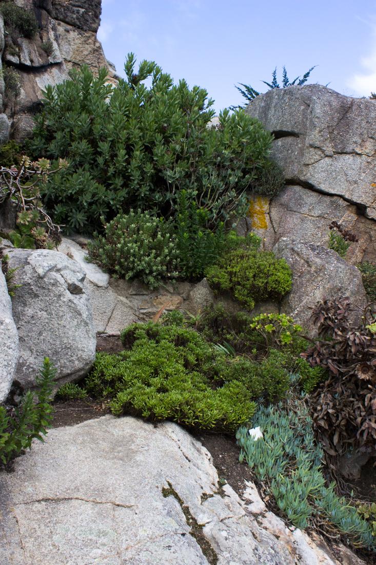 16-9-17-roscoff-exotic-garden-lr-0596