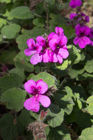 16-9-17-roscoff-exotic-garden-lr-0620