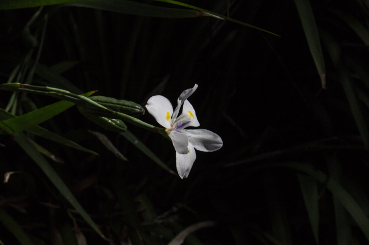 16-9-17-roscoff-exotic-garden-lr-0622