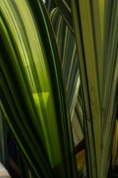 16-9-17-roscoff-exotic-garden-lr-0646