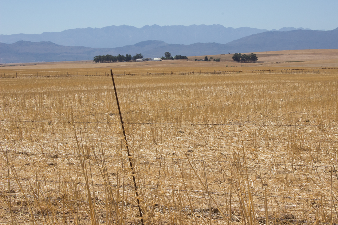 Looking towards the mountains around the Tulbagh Valley