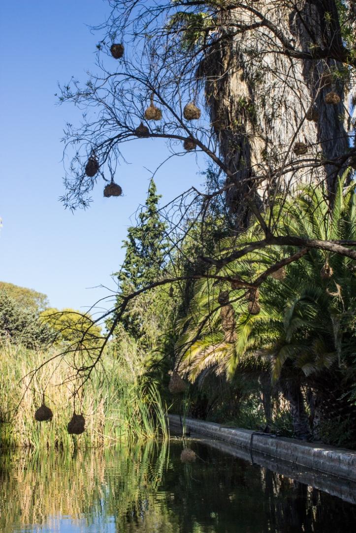 17-1-31-gardens-at-matjiesfontein-lr-4210