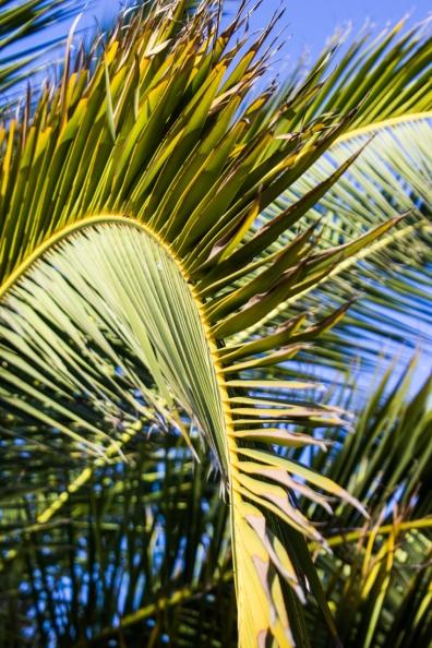 Palms at Matjiesfontein