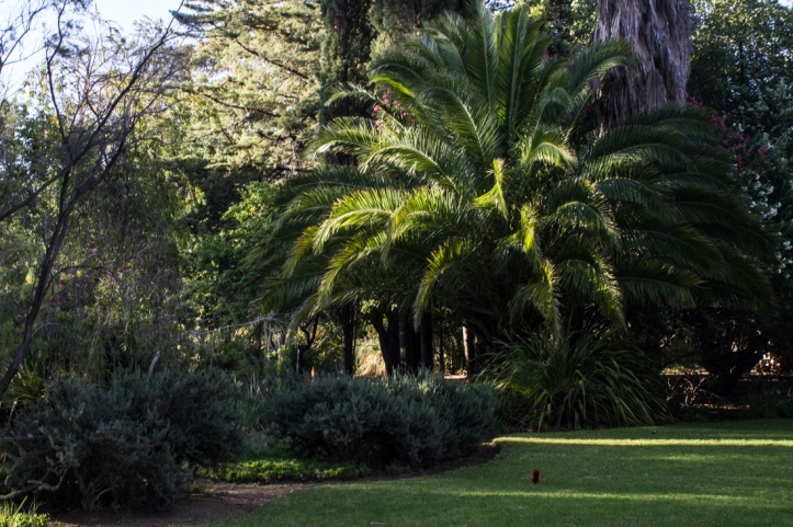 The gardens at Matjiesfontein