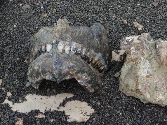 17-2-3 Fossil Trail LR-3304