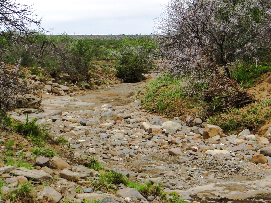 Dry riverbed in Camdebo National Park