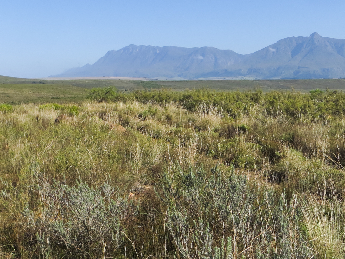 The Langeberg Mountains from the Bontebok National Park