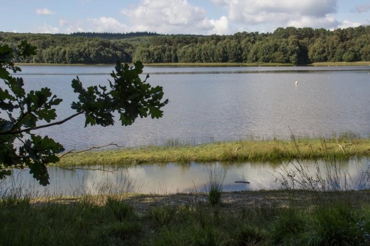 The Lake at Paimpont